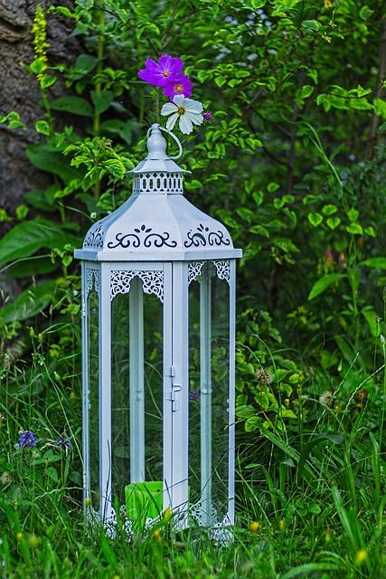 Cosmea Bipinnata, Cosmea, Lantern, Deco, Decoration