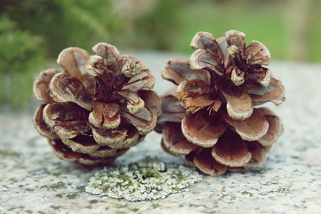 Pine Cones, Tap, Nature, Pine Greenhouse, Close, Deco