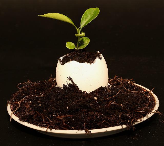 Egg, Plant, Eggshell, Decoration, Close, Deco-ei