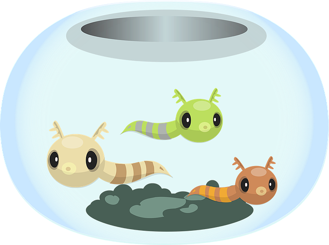 Bowl, Creatures, Decoration, Fish, Fishbowl, Furniture