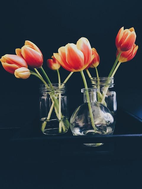 Bloom, Blossom, Decoration, Flora, Flowers, Tulips