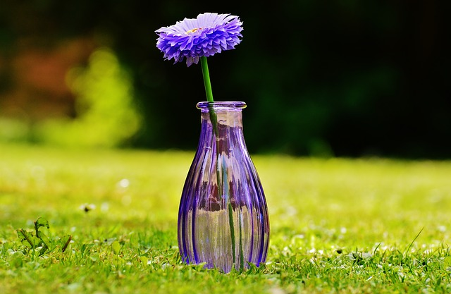 Vase, Glass, Flower, Decoration, Purple, Transparent