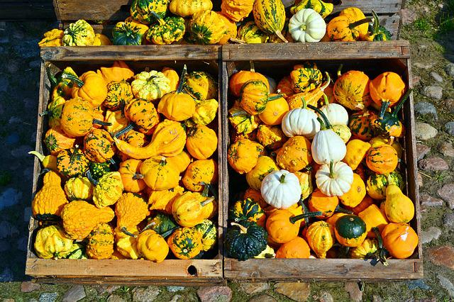 Pumpkin, Harvest Time, Sale, Decoration, Benefit From
