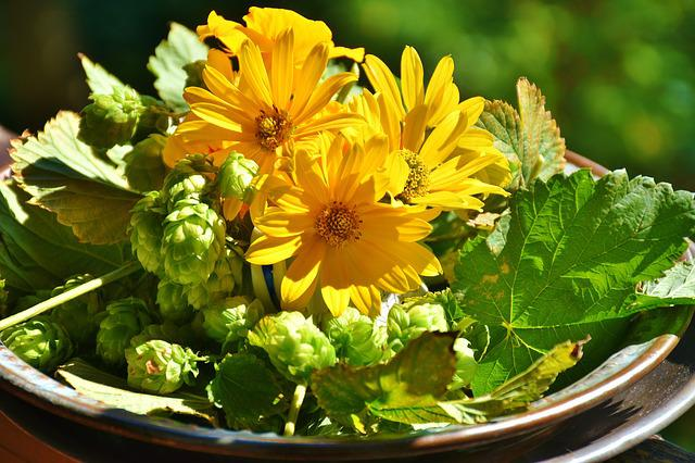 Hops, Sunflower, Green, Hops Fruits, Plant, Decoration