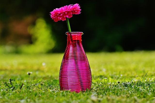 Vase, Glass, Flower, Decoration, Pink, Transparent
