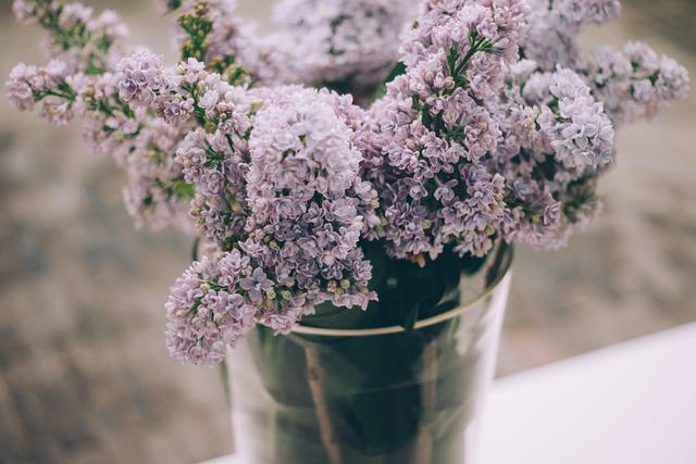Bloom, Decoration, Decorative, Flora, Flowers, Plant