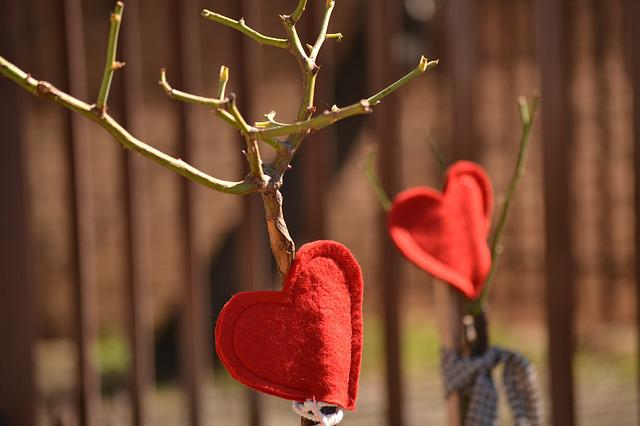 Red Hearts, Decoration, Rose Tree, Pruned