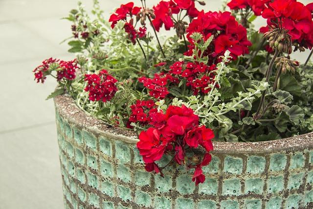 Geraniums, Garden, Red, Pot, Decoration, Summer