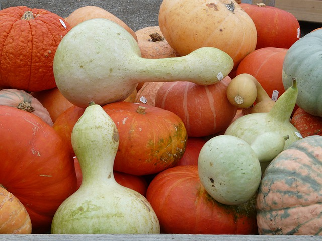 White Gourds, Pumpkins, Lagenaria Siceraria, Decoration