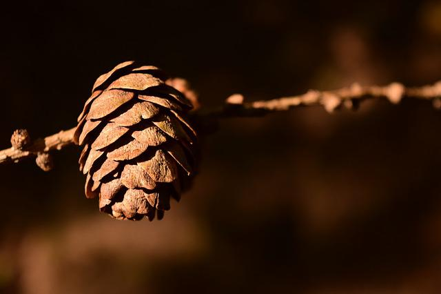 Tap, Pine Cones, Close, Background, Decorative, Brown