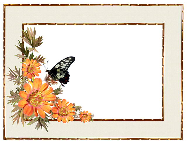 Frame, Border, Flowers, Butterfly, Decorative
