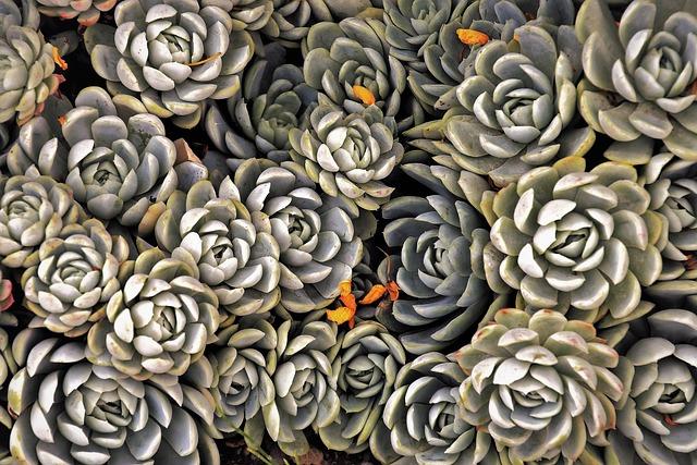 Succulents, Plants, Decorative, Green, Nature, Natural
