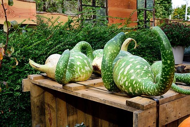 Pumpkin, Bottle Gourd, Decorative Squashes