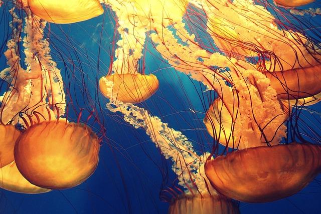 Animals, Jellyfish, Deep Ocean, Deep Sea, Marine Life
