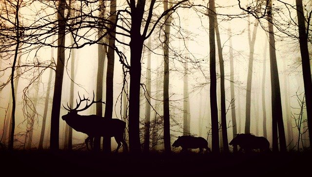 Animals, Forest, Silhouette, Deer, Wild Boars, Fog