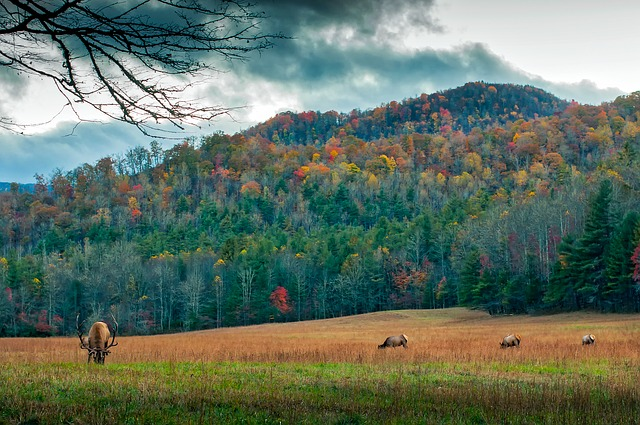 North Carolina, Meadow, Deer, Elk, Wildlife, Animals