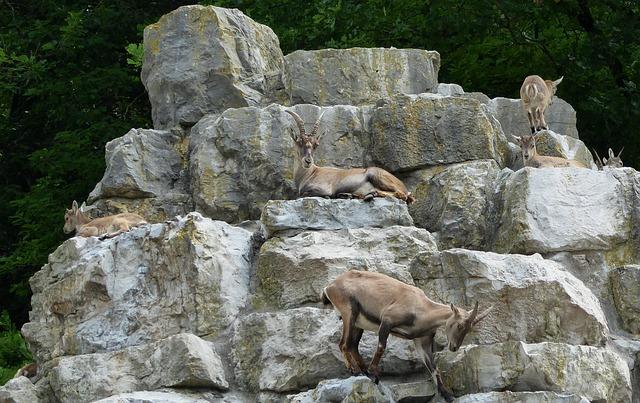 Deer Park, Nature, Ibex, Rock, Animals