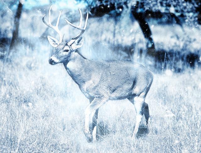 Animal, Deer, Snow, Nature, Art, Scrapbooking, Paper