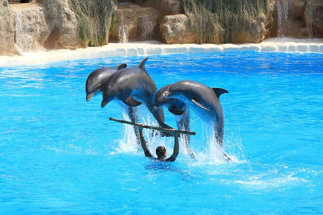 Dolphins, Preview, Delfin, Herd, Jump, Dolphinarium