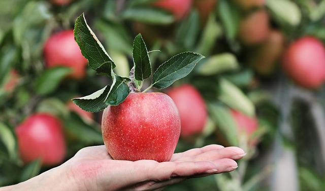 Apple, Red, Hand, Apple Orchard, Delicious, Fruit