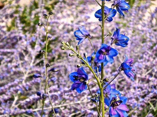 Delphinium, Flower, Blue, Spring, Summer, Field, Garden