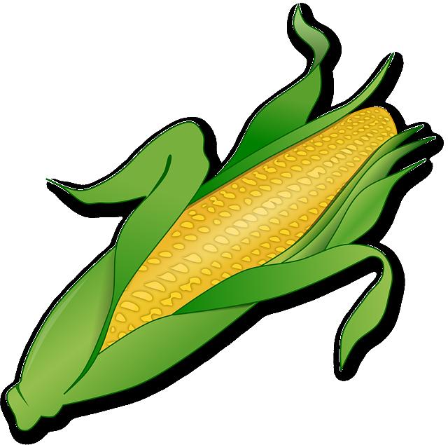 Corn, Food, Denmark, Plant, Farm, Agriculture, Yellow
