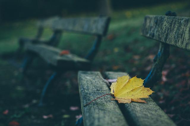 Benches, Depth Of Field, Leaf, Wood