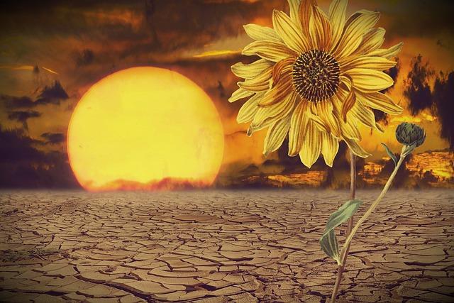 Sun, Sunflower, Desert, Yellow Flower, Yellow, Dry