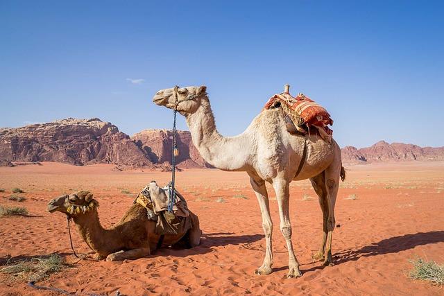Camel, Wadi Rum, Desert, Travel, Jordan, Sand