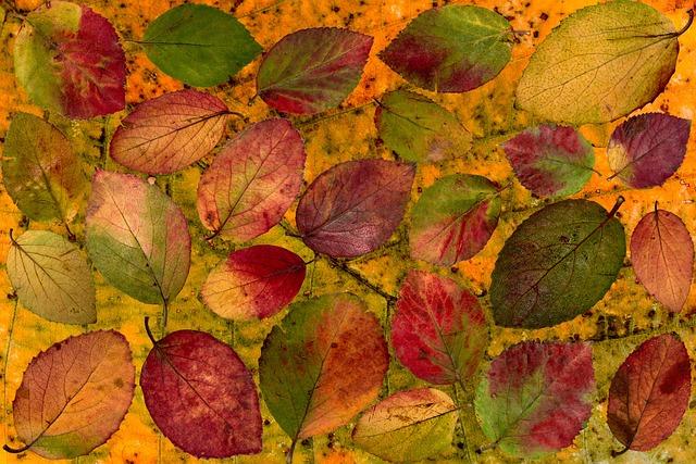 Leaves, Colorful, Composition, Foliage, Design