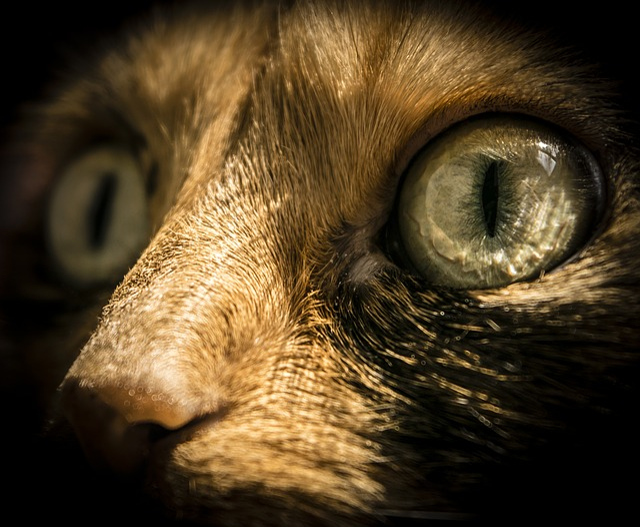 Face, Animal, Mammal, Portrait, Eye, Desktop, Pet, Cat