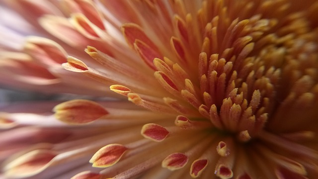 Nature, Color, Flower, Desktop, Closeup