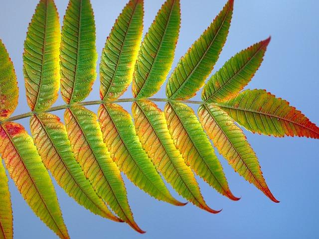 Leaf, Nature, Flora, Desktop, Tropical