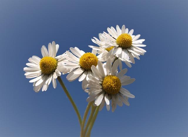 Nature, Flower, Flora, Summer, Petal, Desktop