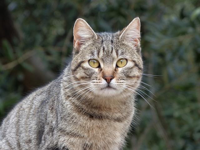 Cat, Housecat, Stalking, Detail, Brindle, Feline
