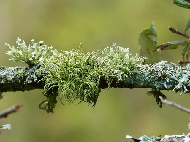 Branch, Lichen, Lichens, Detail, Beauty