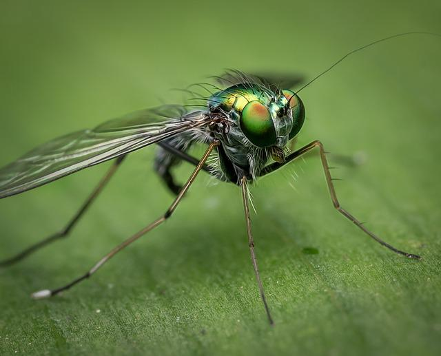 Macro, Fly, Nature, Insect, Bug, Green, Colour, Detail