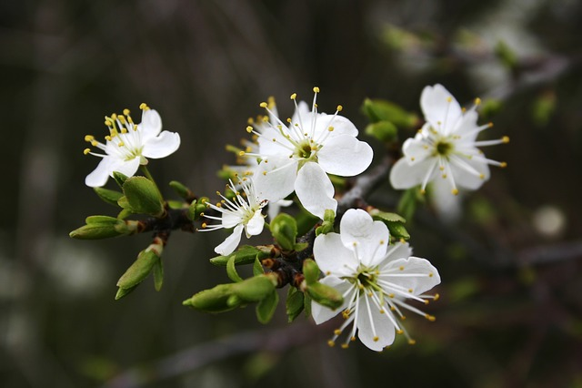 Detail, White Flowers, Spring, Sprig, Garden