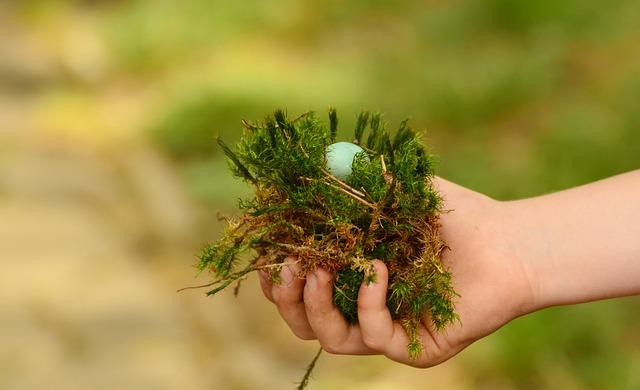 Egg, Nest, Hand, Found, Detention, Green, Security