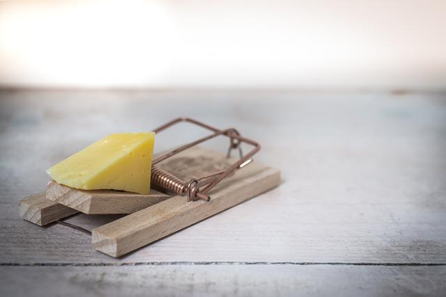 Mouse Trap, Cheese, Device, Trap, Mouse, Danger, Bait