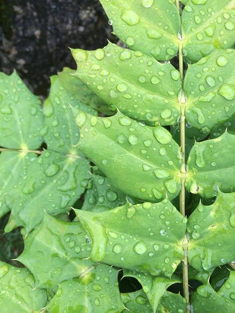 Blade, Dew, Natural, Green, Plant, Fresh