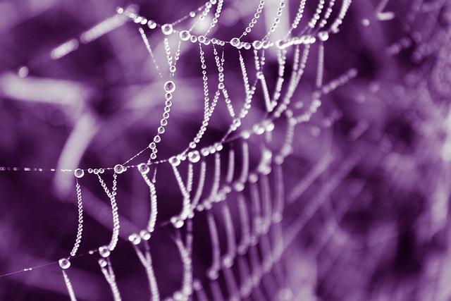 Web, Dew, Dew Drops, Dew Drops On The Web, Nature