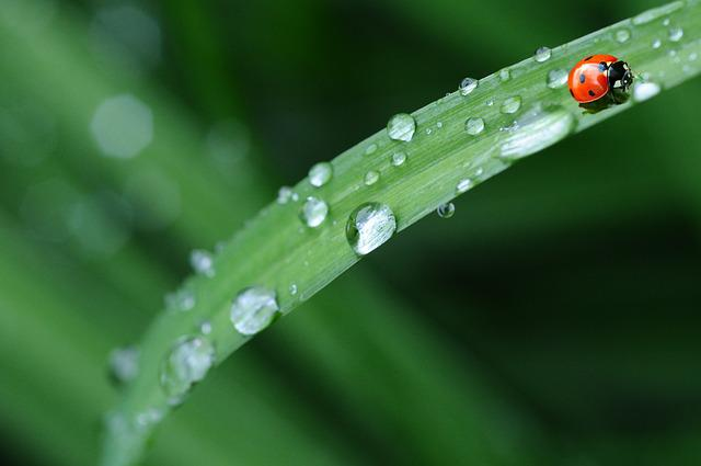 Ladybug, Drop Of Water, Rain, Leaf, Spring, Dew Drop