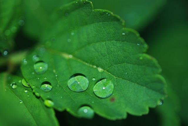 Leaf, Droplet, Water, Dew, Drops, Nature, Green
