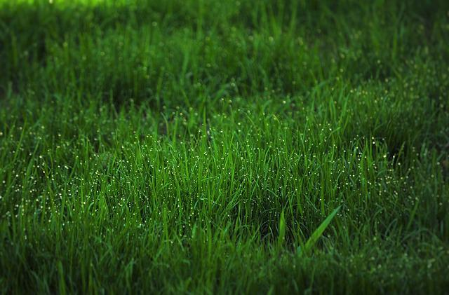 Grass, Dew, Fresh, Garden, Green, Nature, Water