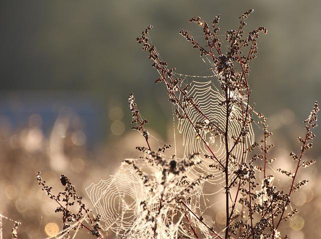 Cobweb, Dew, Moist, Dewdrop, Close Up, Web