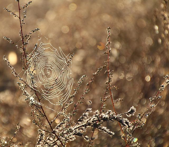 Cobweb, Dew, Moist, Dewdrop, Close, Network