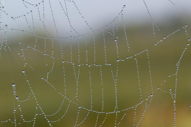 Cobweb, Network, Dewdrop, Dew, Morning Sun, Close