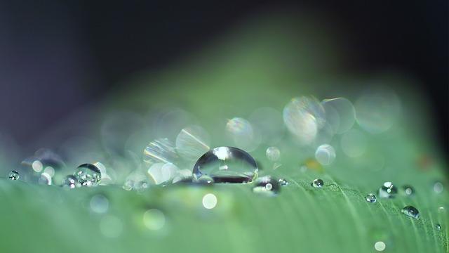 Dewdrops, Water Drops, Raindrops, Macro, Morning Dew