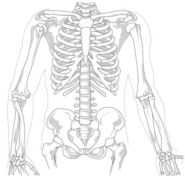 Skeleton, Human, Diagram, Backache, Spine, Rib